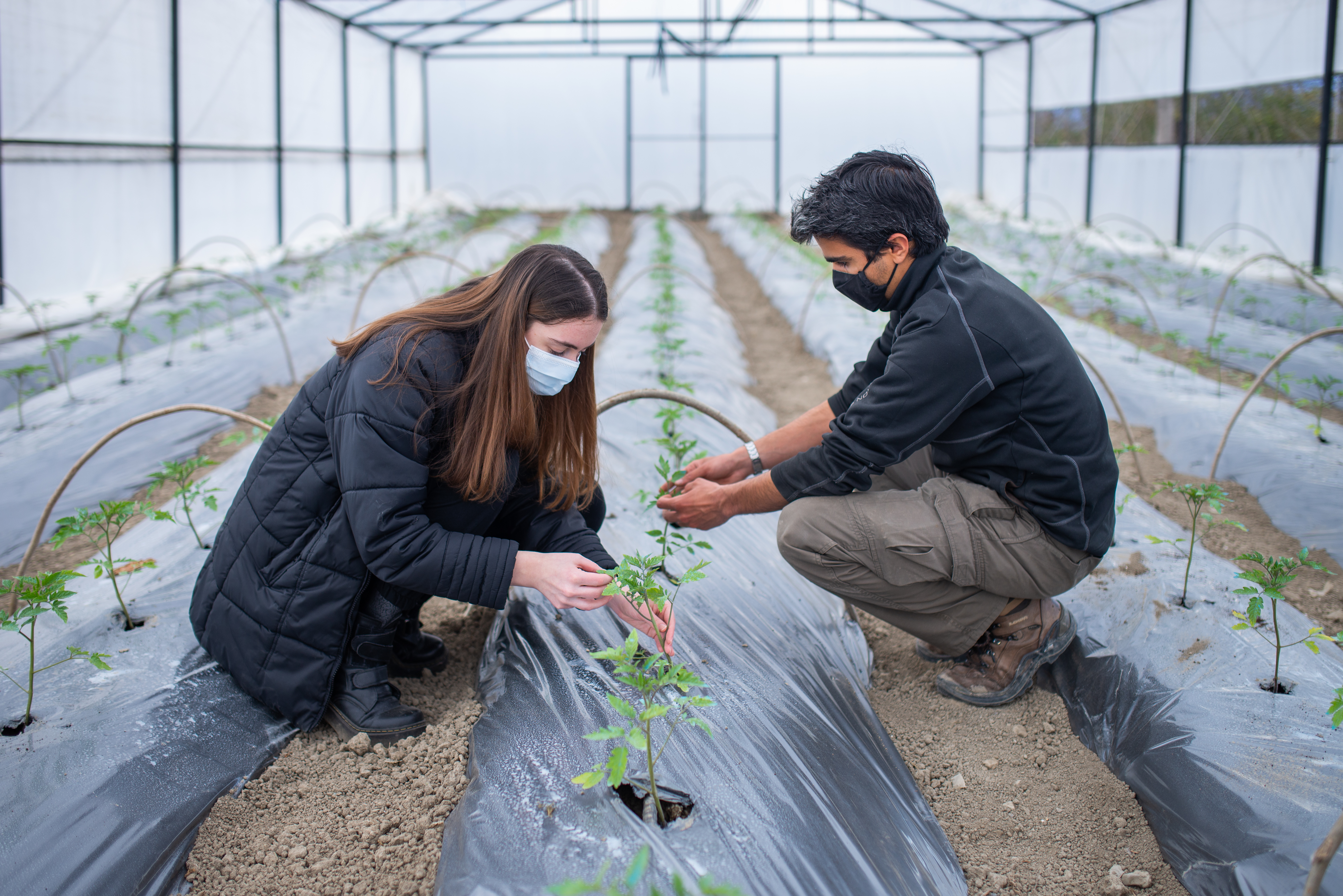 EU and FAO support to Georgian farmers: building resilience amid the pandemic