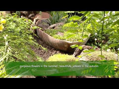 World Environment Day 2021:  Zurab Shevardnadze, Georgian gardener, owner of Gardenia
